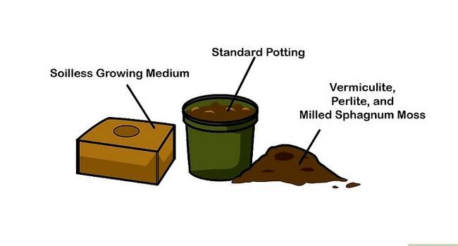 Titel afbeelding Germinate Seeds Step 3