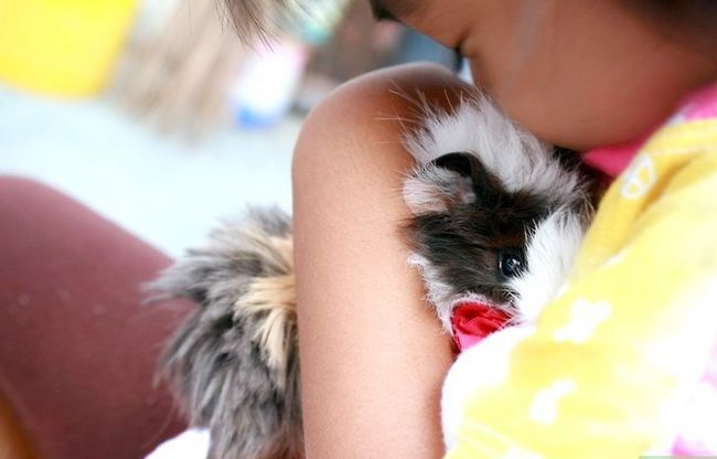 Titel afbeelding Make Your Cavia Pig Happy Without a Second Guinea Pig Stap 1