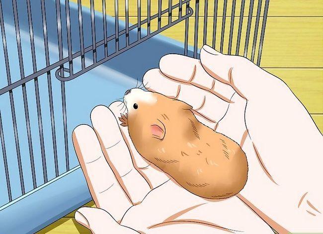 Titel afbeelding Make Your Hamster Trust You Step 12