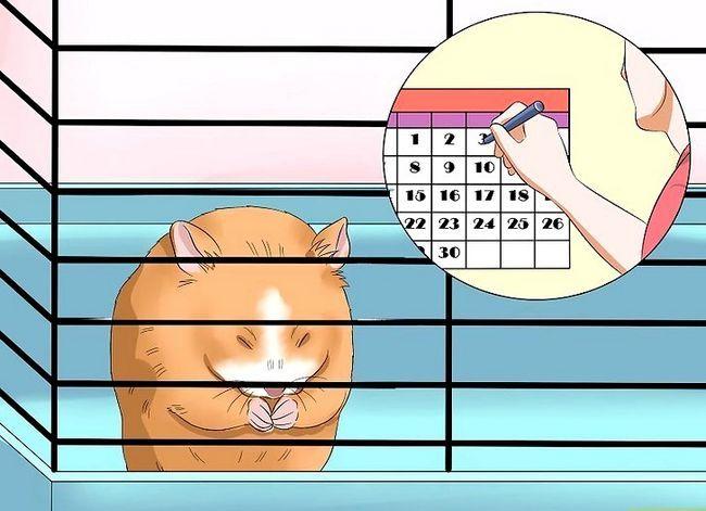 Titel afbeelding Make Your Hamster Trust You Step 2