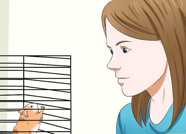 Titel afbeelding Make Your Hamster Trust You Step 3