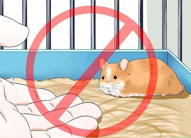 Titel afbeelding Make Your Hamster Trust You Step 5