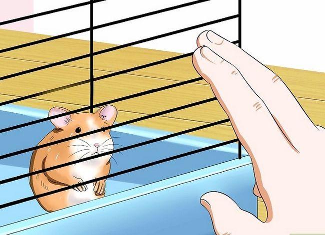 Titel afbeelding Make Your Hamster Trust You Step 6
