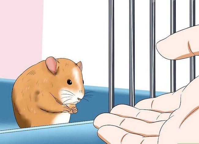 Titel afbeelding Make Your Hamster Trust You Step 8