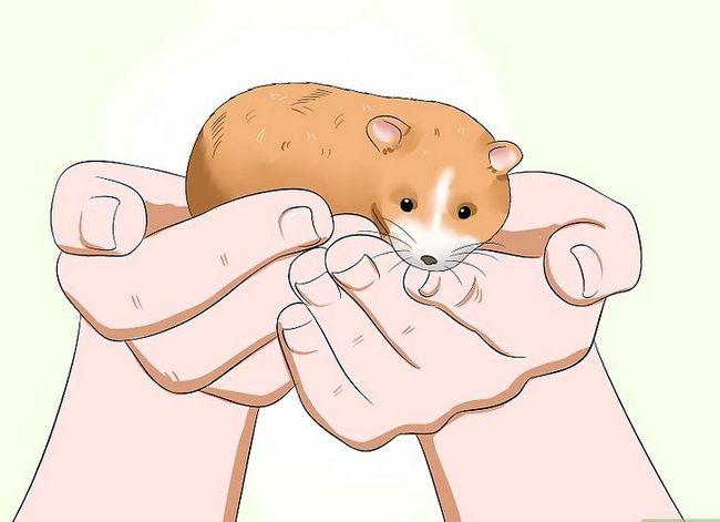 Titel afbeelding Make Your Hamster Trust You Step 9