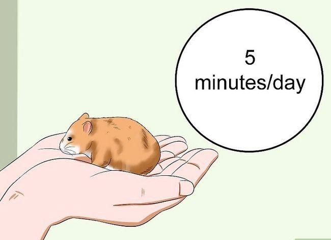 Titel afbeelding Make Your Hamster Trust You Step 10
