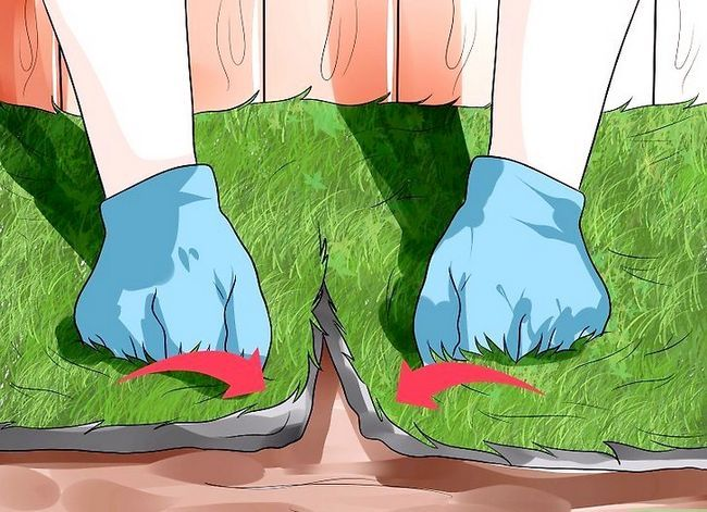 Titel afbeelding Grow a Lawn Easily Step 12