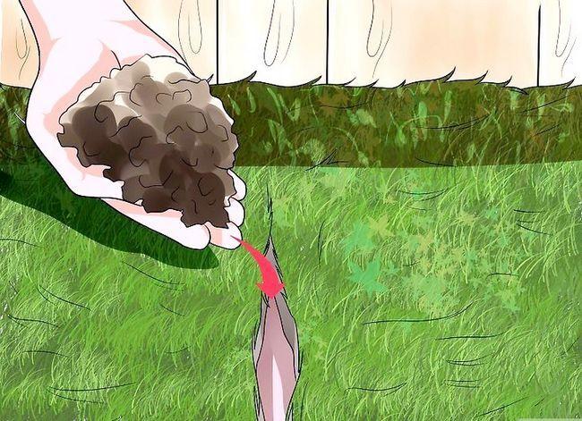 Titel afbeelding Grow a Lawn Gemakkelijk Stap 14