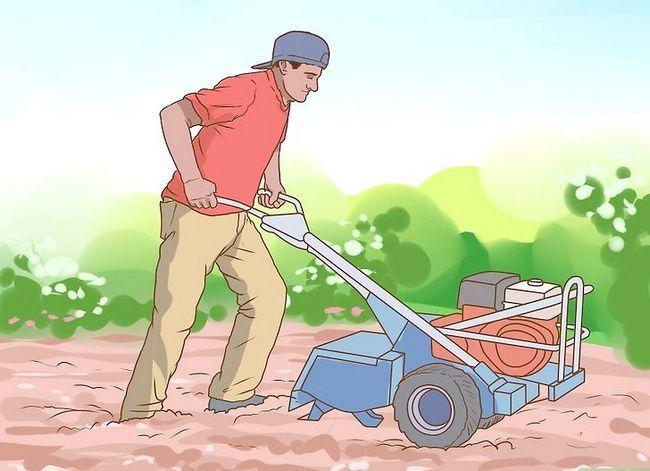 Titel afbeelding Grow a Clover Lawn Step 6