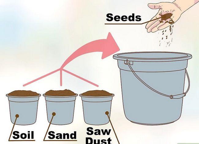 Titel afbeelding Grow a Clover Lawn Step 10