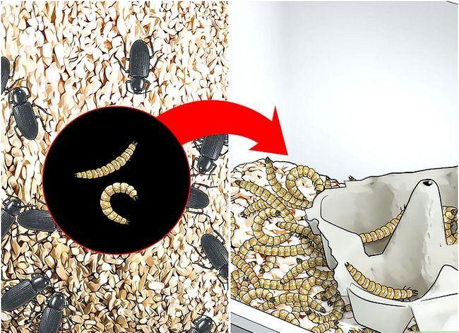 Titel afbeelding Raise Mealworms Step 14