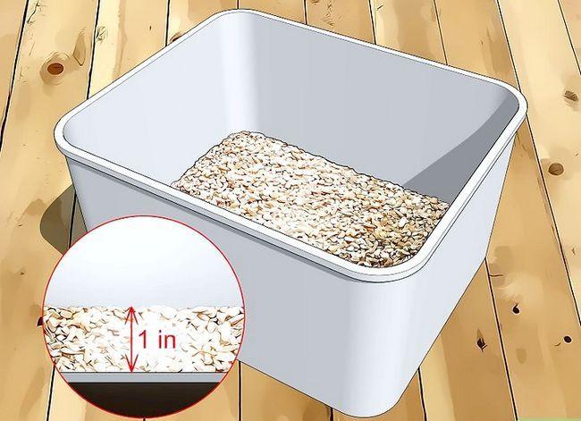 Titel afbeelding Raise Mealworms Step 2