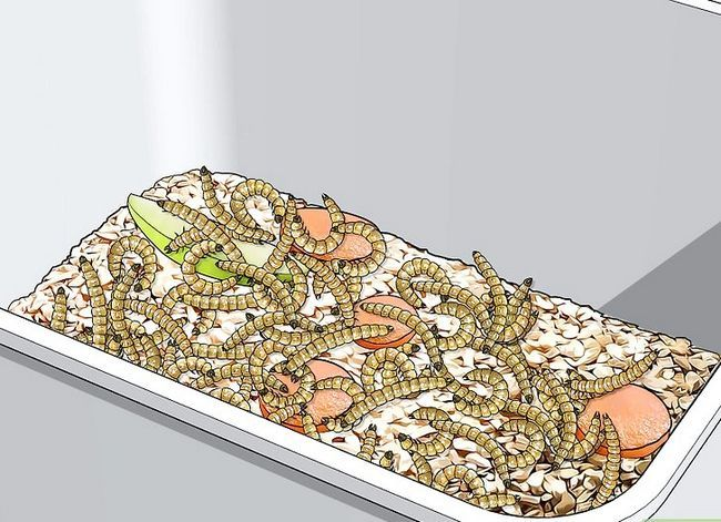Titel afbeelding Raise Mealworms Step 4