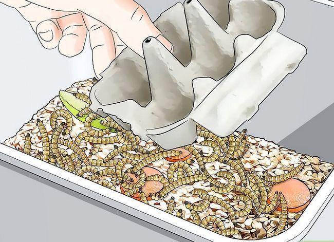 Titel afbeelding Raise Mealworms Step 5