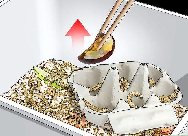 Titel afbeelding Raise Mealworms Step 8