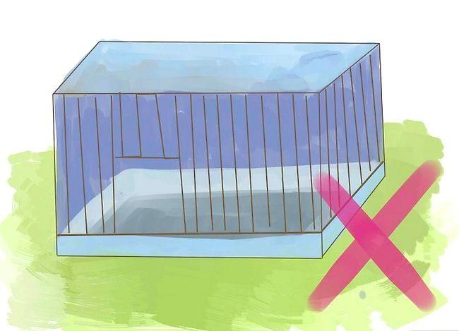 Hoe maak je een comfortabel huis voor je nieuwe gerbil