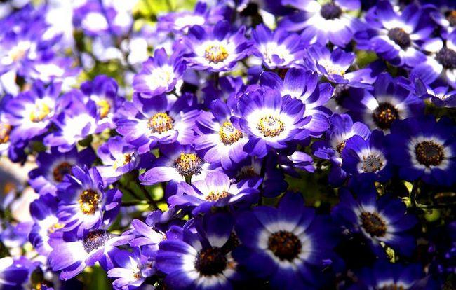 Titel afbeelding Purple! 6361
