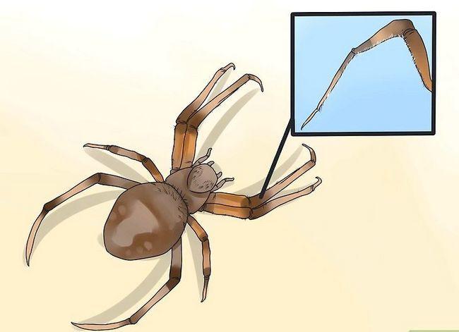 Titel afbeelding Identify a Barn Spider Step 3