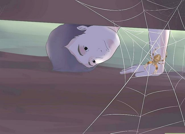 Titel afbeelding Identify a Barn Spider Step 5