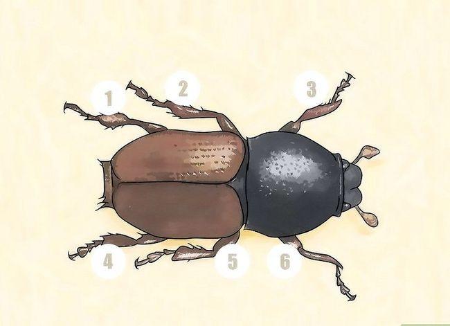 Titel afbeelding Identify Beetles Step 1