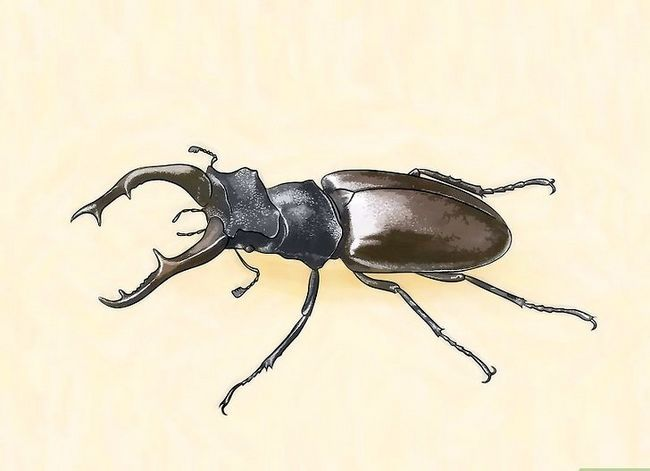 Titel afbeelding Identify Beetles Step 2