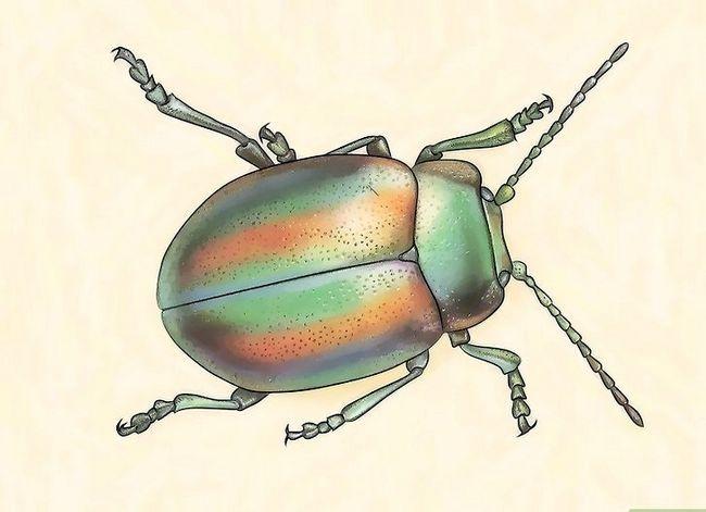 Titel afbeelding Identify Beetles Step 3