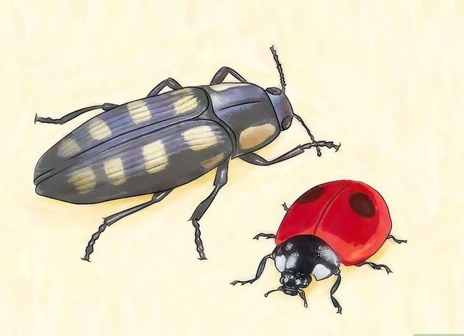 Titel afbeelding Identify Beetles Step 4