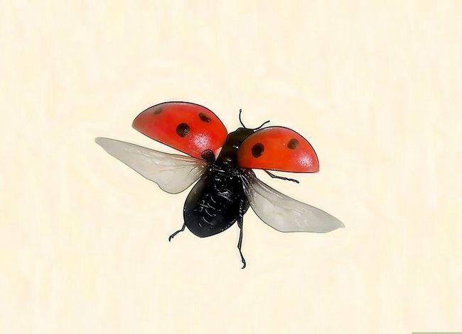 Titel afbeelding Identify Beetles Step 5