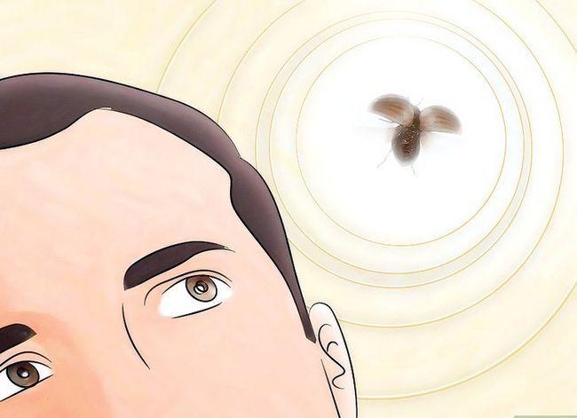 Titel afbeelding Identify Beetles Step 6