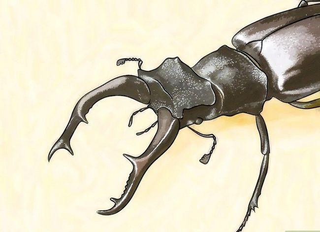 Titel afbeelding Identify Beetles Step 7