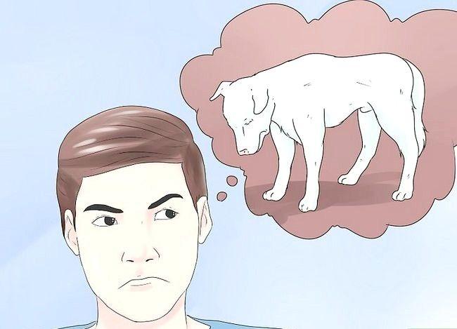 Hoe aanvalsymptomen bij een hond te identificeren