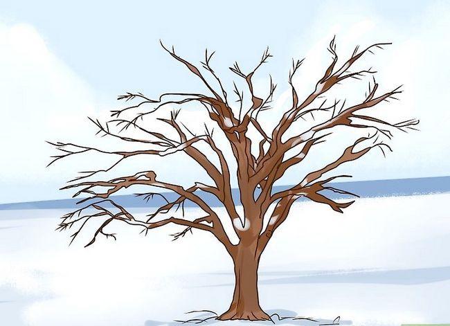 Titel afbeelding Identify an Elm Tree Step 12
