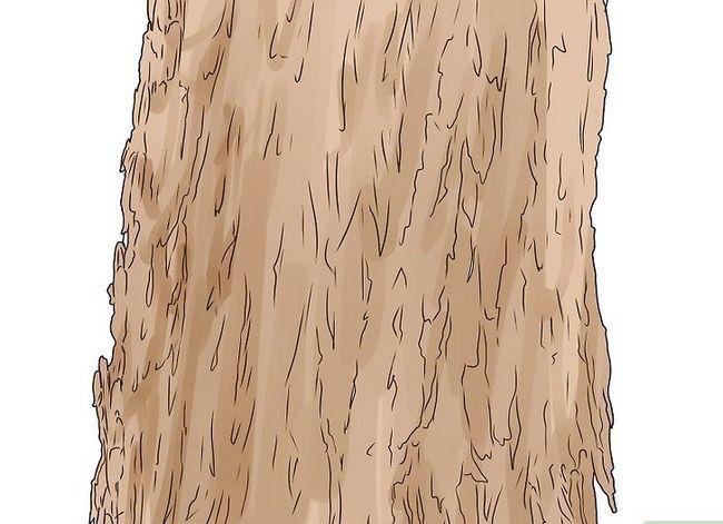 Titel afbeelding Identify an Elm Tree Step 2