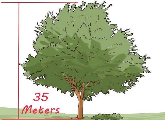 Titel afbeelding Identify an Elm Tree Step 3
