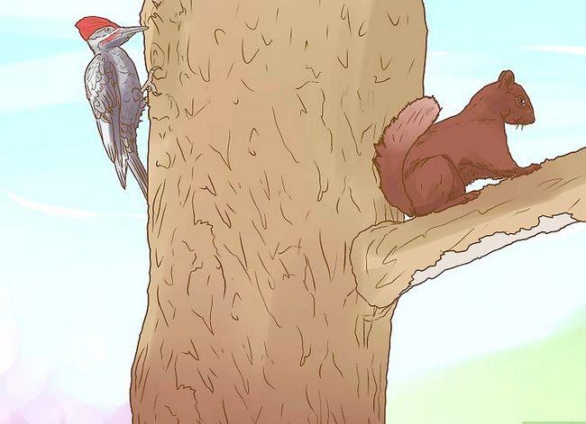 Titel afbeelding Identify an Elm Tree Step 6