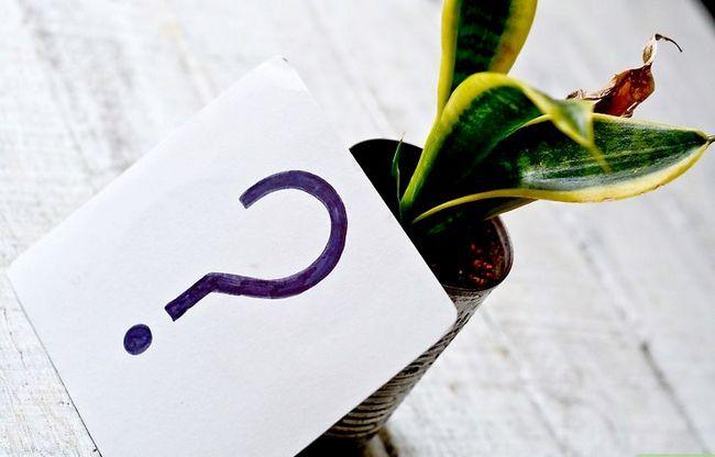 Titel afbeelding Identify a Houseplant Stap 1