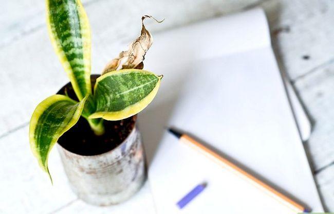 Titel afbeelding Identify a Houseplant Step 4