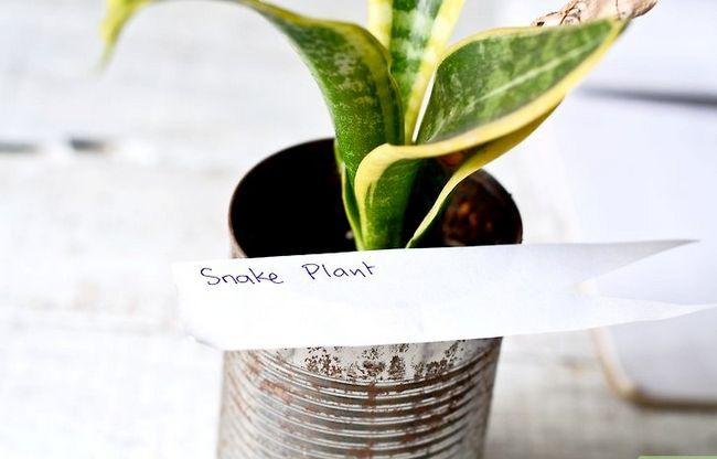Titel afbeelding Identify a Houseplant Stap 5