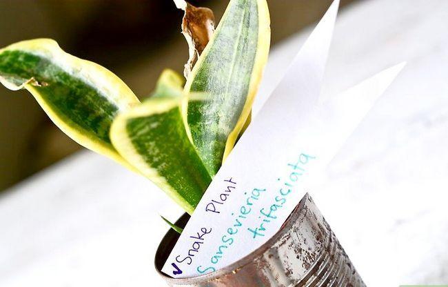 Titel afbeelding Identify a Houseplant Step 6