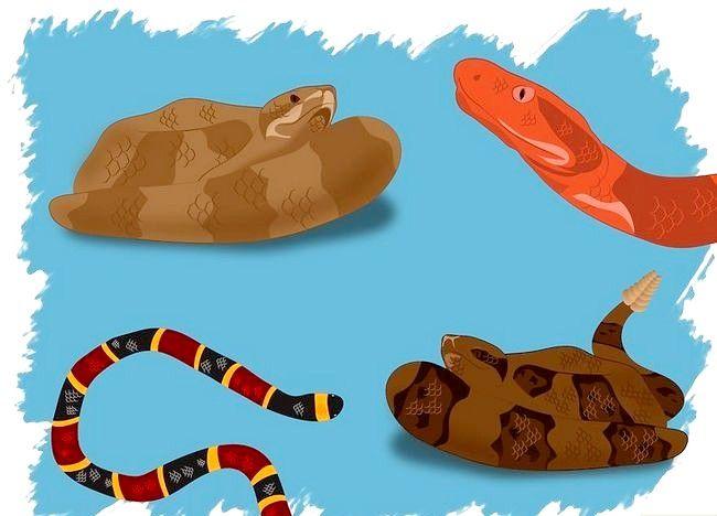 Hoe een giftige slang te identificeren