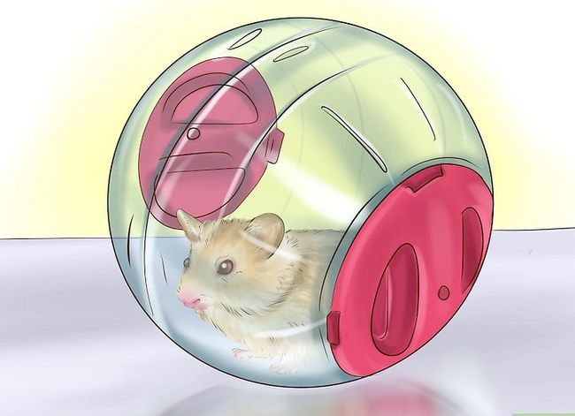 Titel afbeelding Play With a Hamster Step 7