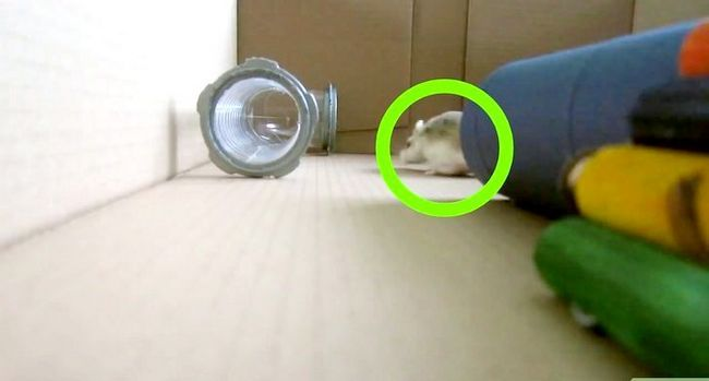 Titel afbeelding Play With a Hamster Step 10