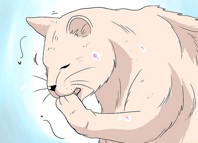 Hoe om te gaan met haarverlies bij katten