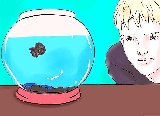 Hoe de aquarium van een betavis schoon te maken