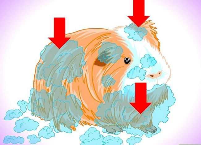 Titel afbeelding Keep Your Guinea Pigs Smelling Good Step 6