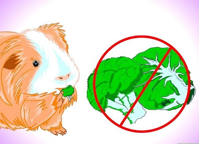 Titel afbeelding Keep Your Guinea Pigs Smelling Good Step 8
