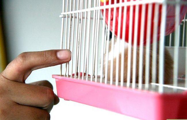 Titel afbeelding Keep Hamsters Happy Step 4