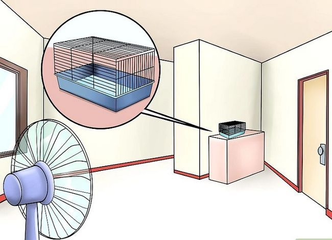 Titel afbeelding Keep a Hamster Cool in Hot Weather Stap 3