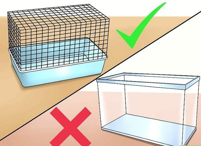 Titel afbeelding Keep a Hamster Cool in Hot Weather Stap 5