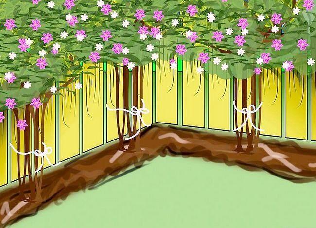Clematis planten